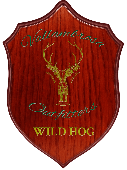 Vallambrosa Outfitters Wild Hog Hunting Package