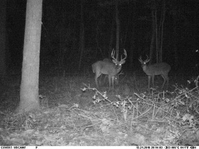 bucks at night